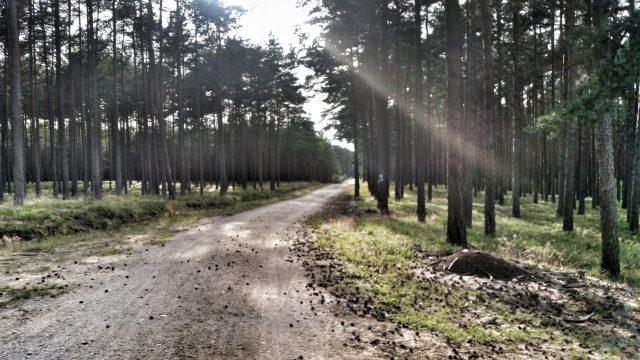 Waldweg auf dem Eurovelo 10 in Polen